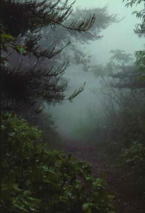 fog: Walks, Paths, Foggy Forests, Mists, Secret Places, Dark, Trees, Natural, Into The Wood