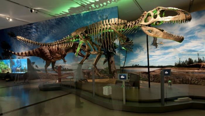49 Best Images About Paleontology On Pinterest History: dinosaur museum ohio