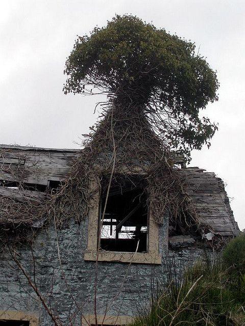 abandoned, via Marie-Pierre