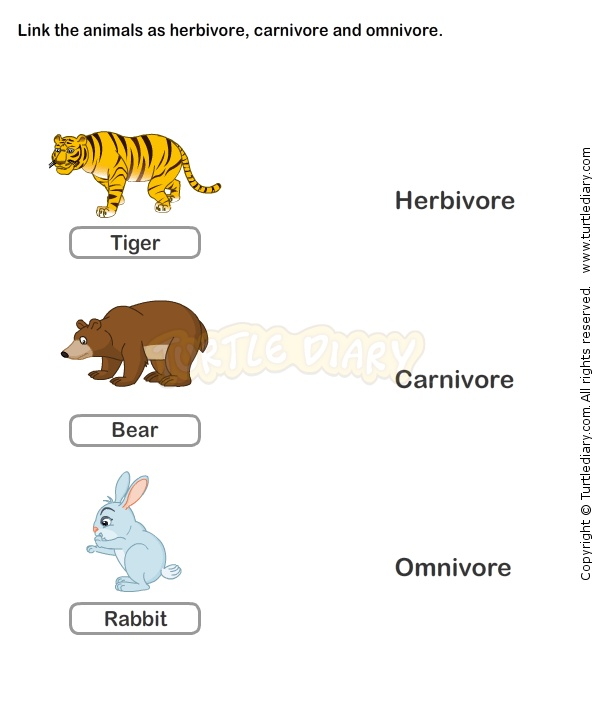 Worksheets For Grade 1 In Science : 27 best life cycle worksheets images on pinterest
