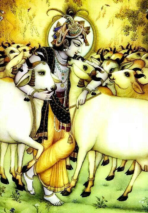 Krishna said . . . that the cows are worshipped even by the demigods, and He practically demonstrated how to protect the cows. NECTAR OF DEVOTION, p.163