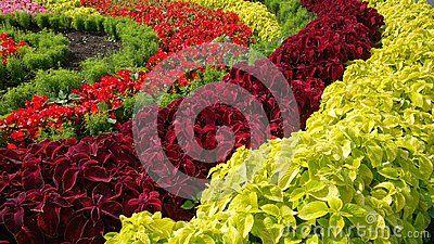Разноцветные цветы на клумбе