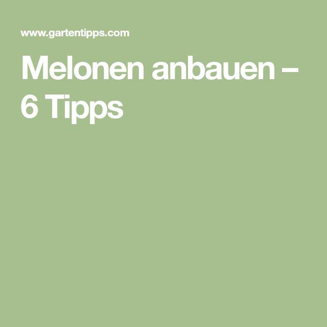 Melonen anbauen – 6 Tipps