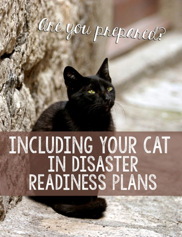 """Emergencies happen all year-round, causing devastation to people and their pets. Often times, we think, """"it'll never happen to me,"""" and neglect to have a disaster plan in place. But, since natural disasters,..."""