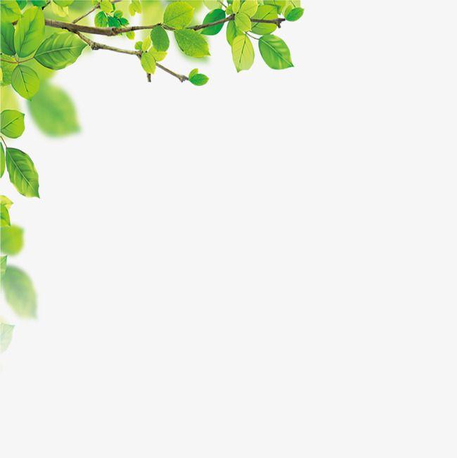 يترك الحدود Png و Clipart Leaf Background Powerpoint Background Design Fruit Coloring Pages