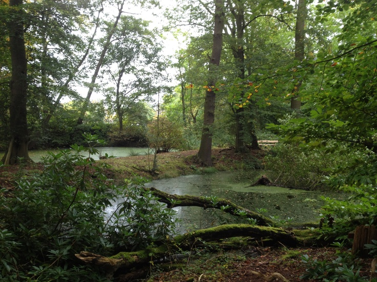 Hannah's Wood