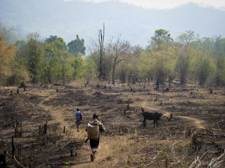 An example of slash and burn agriculture practice Thailand - Slash-and-burn - Wikipedia, the free encyclopedia