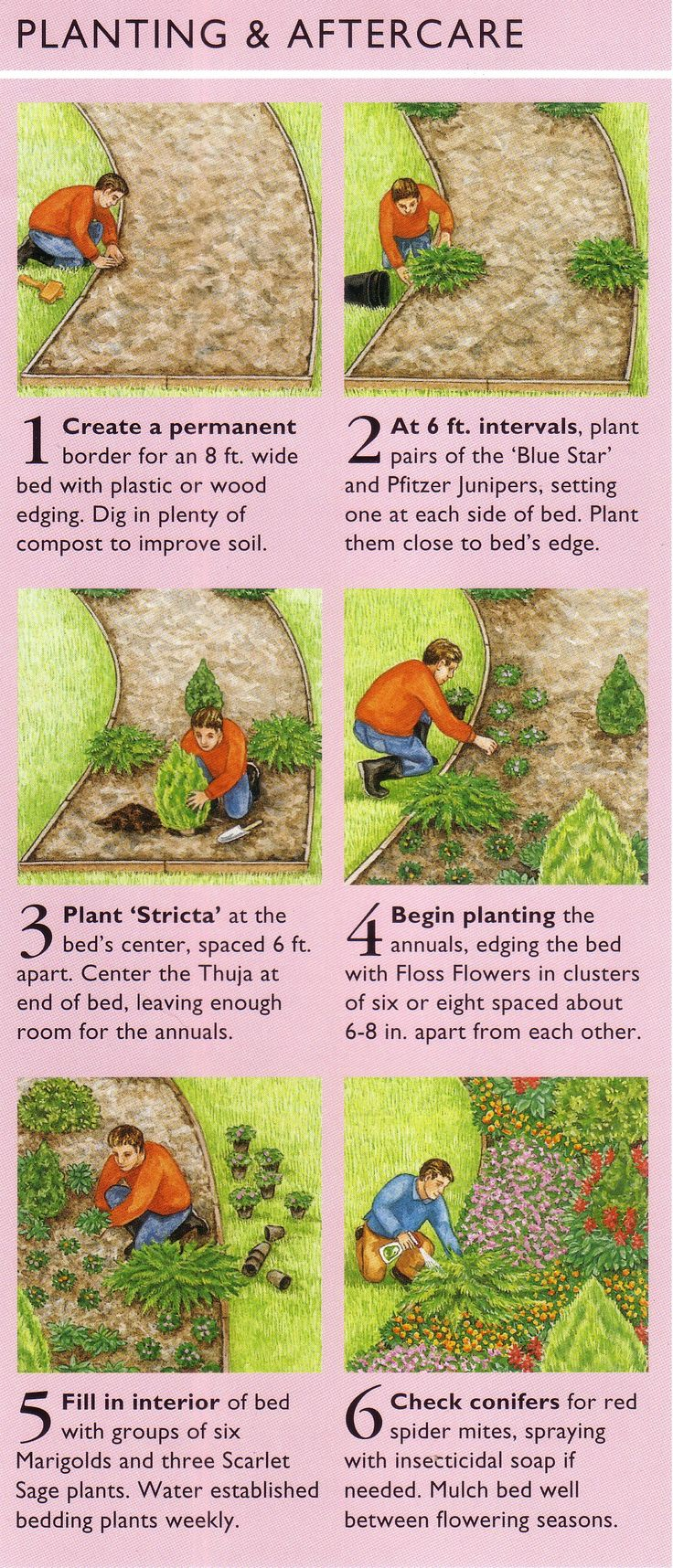 Evergreen Design Planting and Aftercare... This would be beautiful....