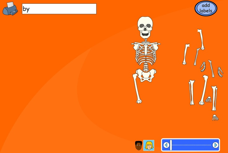 Construct the skeleton and drag the fader bar to check the bones are in the right place. Choose a boy's or girl's body using the buttons below the skeleton. Pupils can be asked to drag labels or type their own depending on ability and lesson objectives. Some pupils might like to label with the names of the bones rather than the body parts.