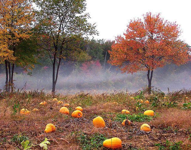 Spooky pumpkin patch.