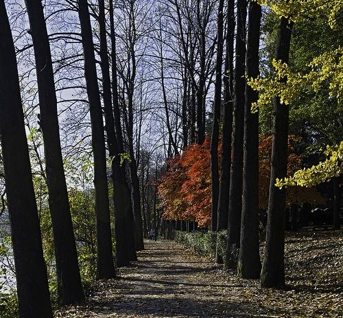 Tree Lined Path Namisom