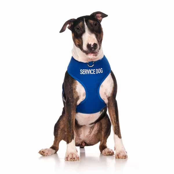 "Blue SERVICE DOG vest harness   Fits Max Neck 43cm (17"") Chest 55-80cm (22-32"")   Model: Bull Terrier"