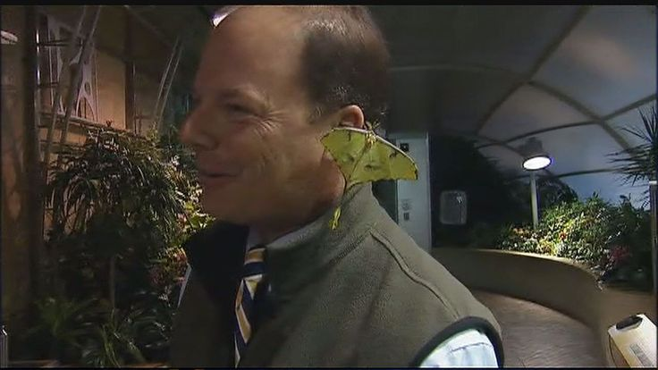 Um jornalista passou por maus bocados durante uma transmissão ao vivo, quando um inseto exótico se aconchegou tanto em seu ouvido que até colocou dois ovos
