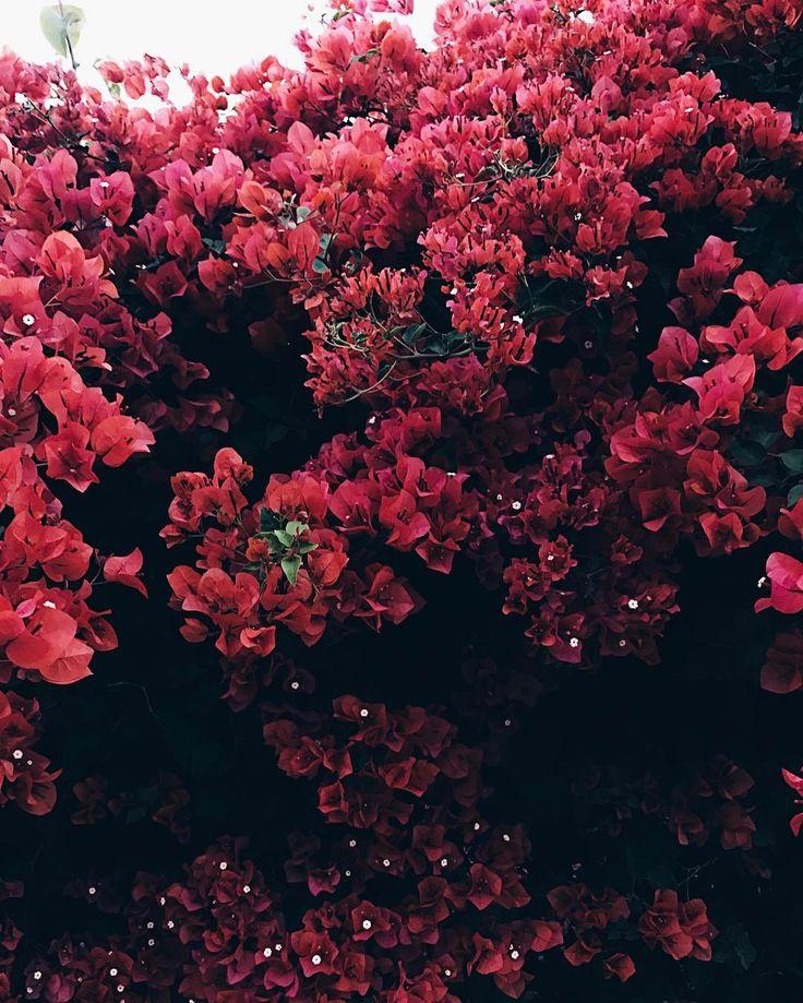 Flower Roses Pinterest: 25+ Beautiful Red Flowers Ideas On Pinterest