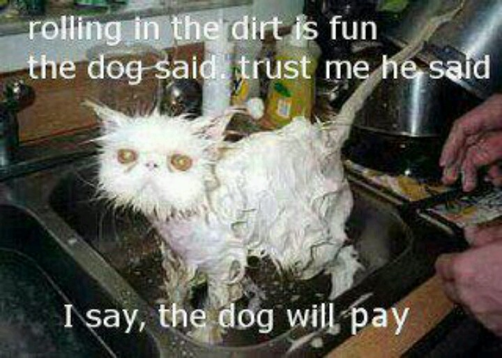how to give a dog a bath that hates water