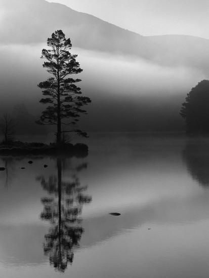 Scots Pine Tree Reflected in Lake at Dawn, Loch an Eilean, Scotland, UK Photographic Print by Pete Cairns at Art.com