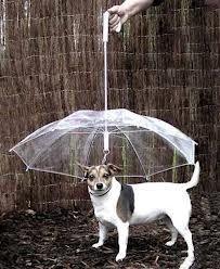 Şemsiye | Petza Evcil Hayvan Ürünleri - petza.com.tr