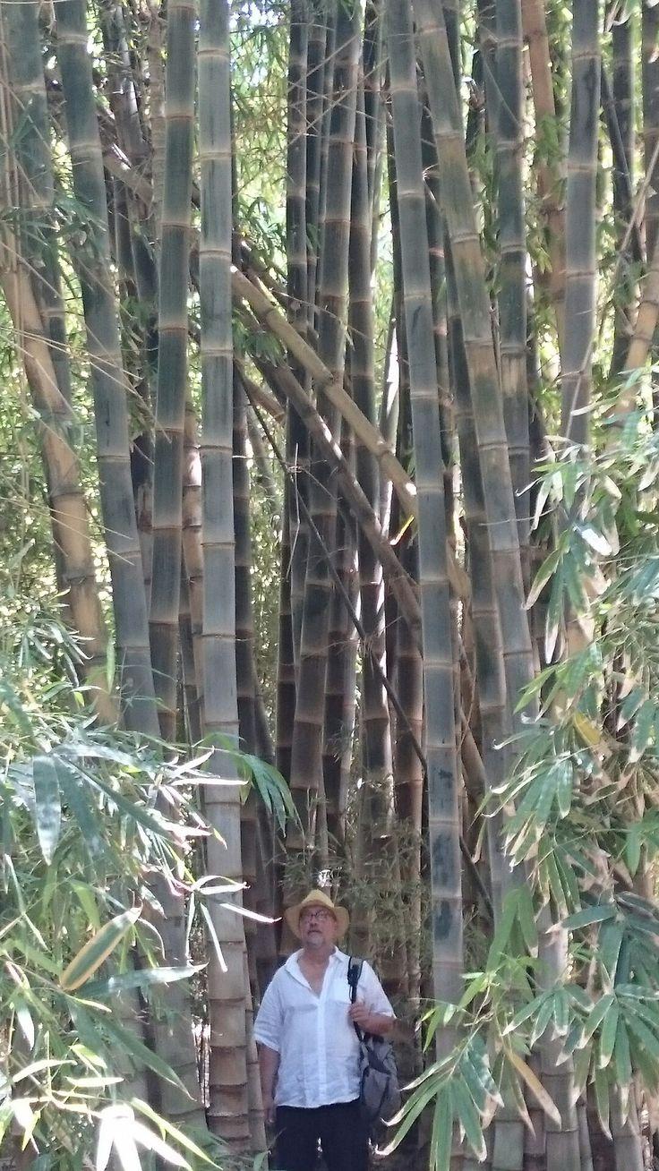 Bambus und toller Mann 👨
