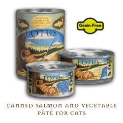 siamese persian mix cat