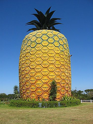 OOOOOHHHH who lives in a pineapple under the sea...(you know you're singing this)    Big Pineapple, Queensland