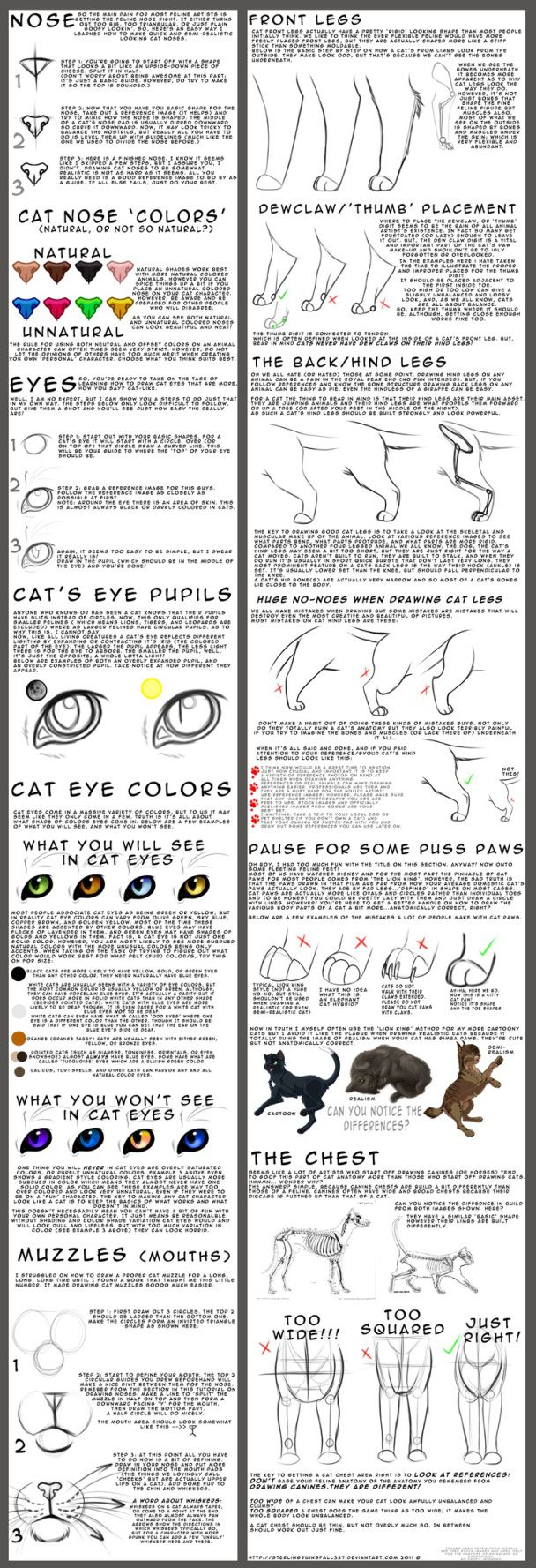 Tutorial on how to draw a cat - with special detail on how to correctly draw the chest and legs.