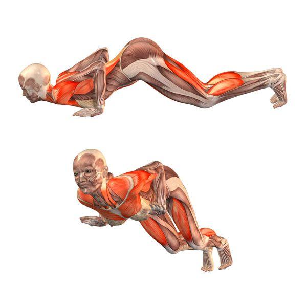 Knees, Chest, and Chin pose - Ashtanga Namaskara - Yoga Poses | YOGA.com