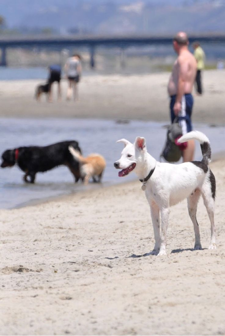 Best Place To Adopt A Dog In San Diego