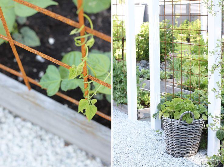 Kasvimaa sai tänä keväänä päällensä pergolavirityksen. Mietin pitkään mitä keksin laatikkokasvimaalle muun muassa köynnöstäville kasve...