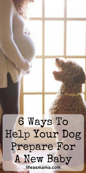 If you're nervous about your dog's acceptance of the new baby, you're not alone. These are some great tips and tricks to helping your fur baby welcome your new bundle of joy!