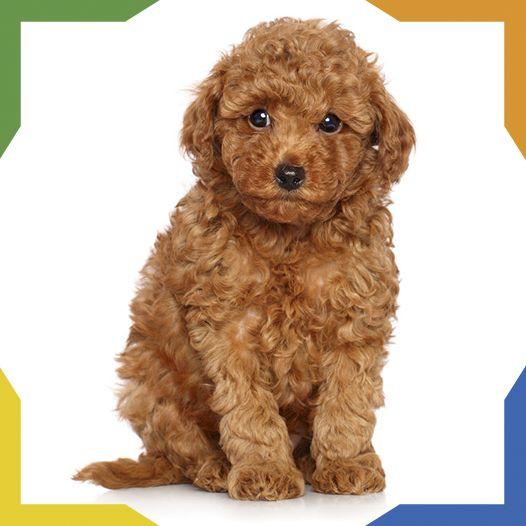 Mejores 73 im genes de razas de perros en pinterest - En que meses se cae mas el pelo ...
