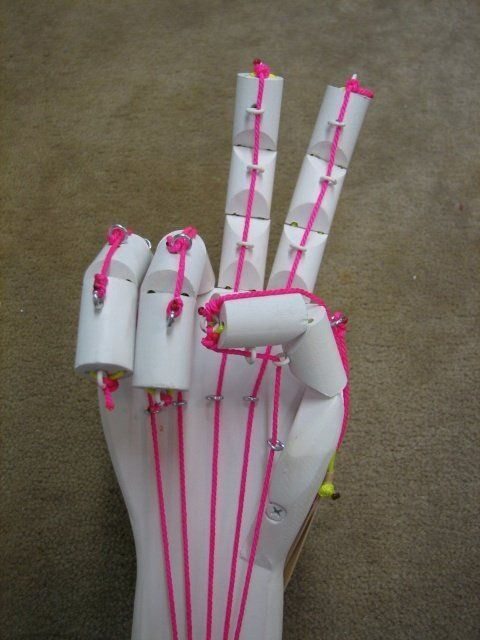 My niece Sydney needed help for a 7th grade Science Fair project. I helped another friend's daughter (Kaitlin) build an articulated hand for a project in the past and suggested we resurrect the project. The build is fun for the kids and I wanted to try some enhancements on the original idea.
