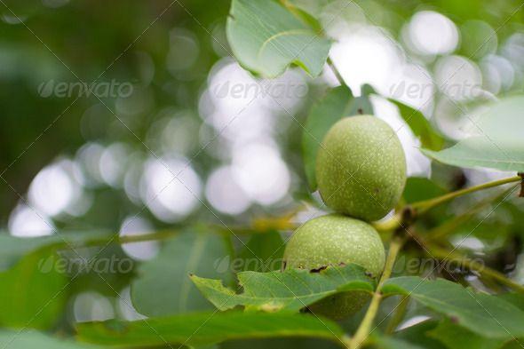 Green wallnuts