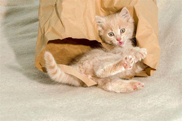 Non sono un #gatto, sono una trottola... sempre in movimento! :-) Sul nostro #blog vi diamo alcuni consigli per gestire la salute del gatto dinamico: http://www.mongrelpet.com/blog/
