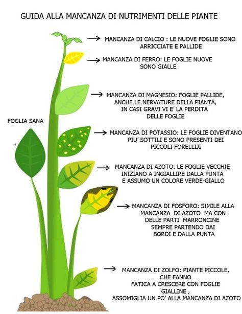 Le vostre #piante hanno le #foglie ingiallite? Ecco quali potrebbero essere le cause e alcune soluzioni per porvi rimedio