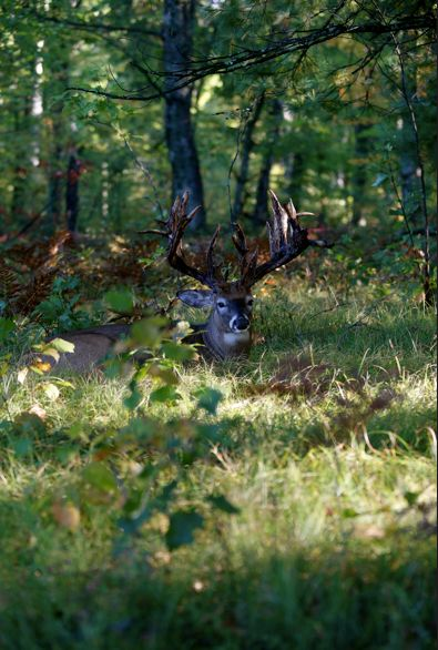 Apple Creek Whitetails.