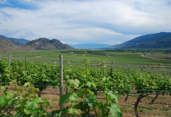 5 New Wineries to Visit in Oliver Osoyoos Wine Country | BCLiving
