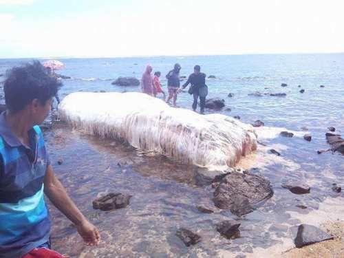 Cronaca: #Mostri #marini #ritrovati sulle spiagge filippine: scienziati spiegano il mistero (link: http://ift.tt/2mk5wxZ )