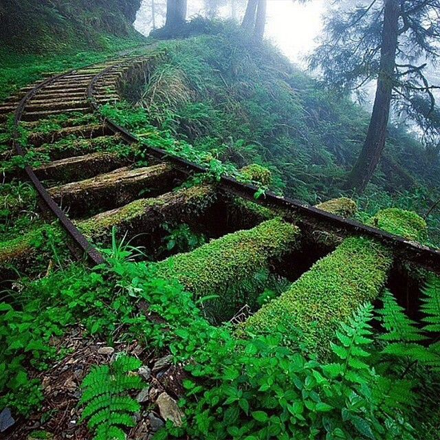 Abandoned Railroad, Taiwan Photo by ©Miharu Kei Via @its.abandoned by wonderful_earthpix http://ift.tt/1tcRwnA