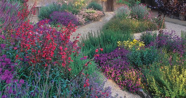 9 Plants That'll Make Your Southern California Garden Flourish
