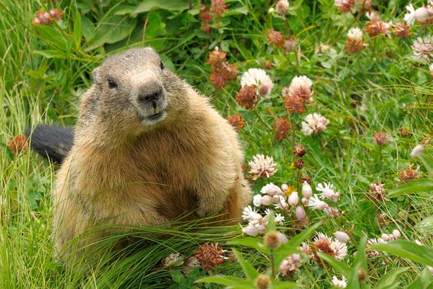 Community Post: 10 Cutest Groundhog Pictures