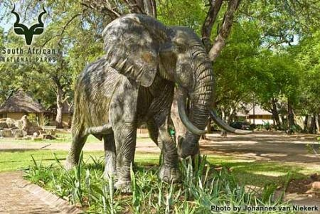 KNP - Letaba - Elephant Hall