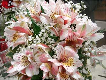 17 Best images about Alstroemeria on Pinterest ...