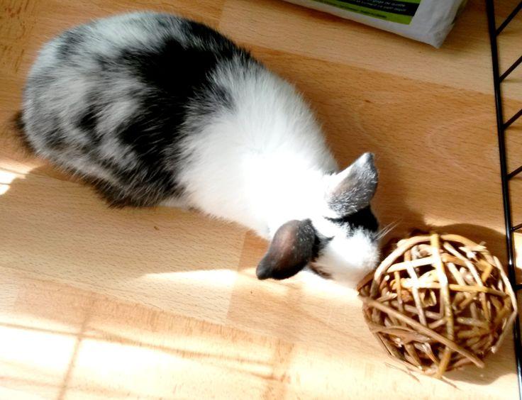 jeu lapin nain : balle en osier