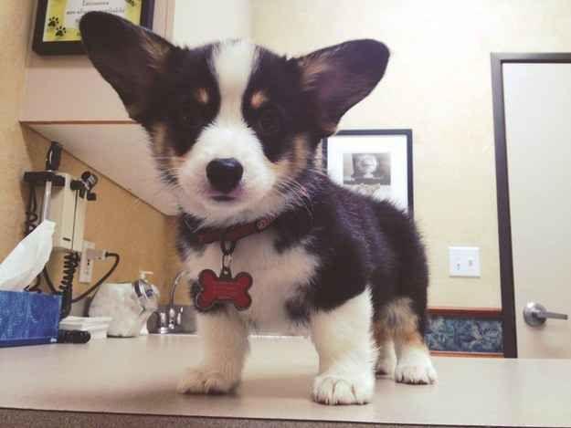 19 cachorros superadorables en su primer día en el veterinario