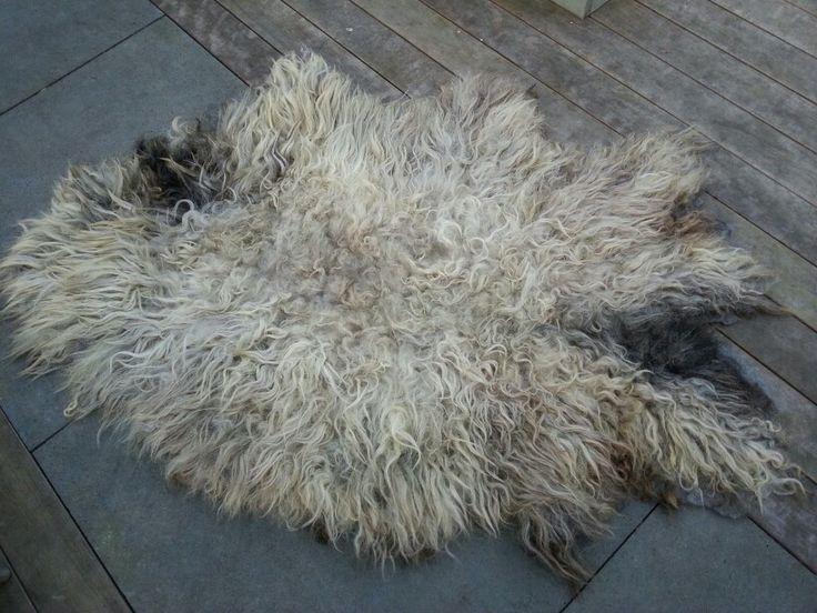 Handmade; gevilte vacht Veluwsheideschaap,  van het enige grijze schaap uit de kudde