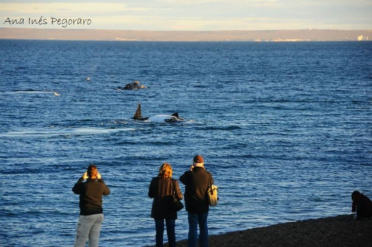 shore whale watching, Puerto madryn