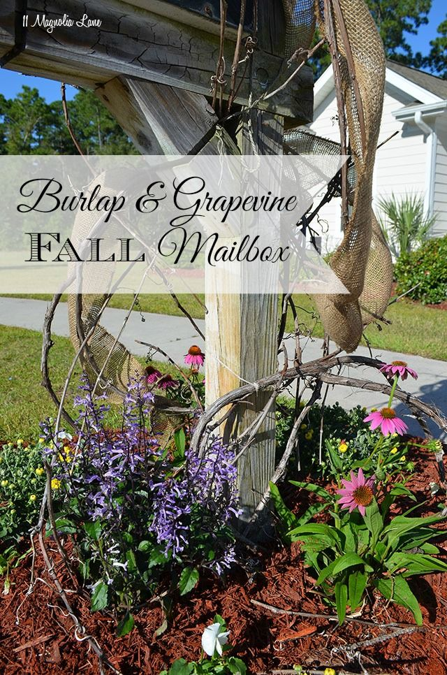 Use natural elements--grapevine and burlap ribbon--along with Fall flowers for a pretty and rustic mailbox area.  The grapevine is a great natural trellis for climbing plants and vines.