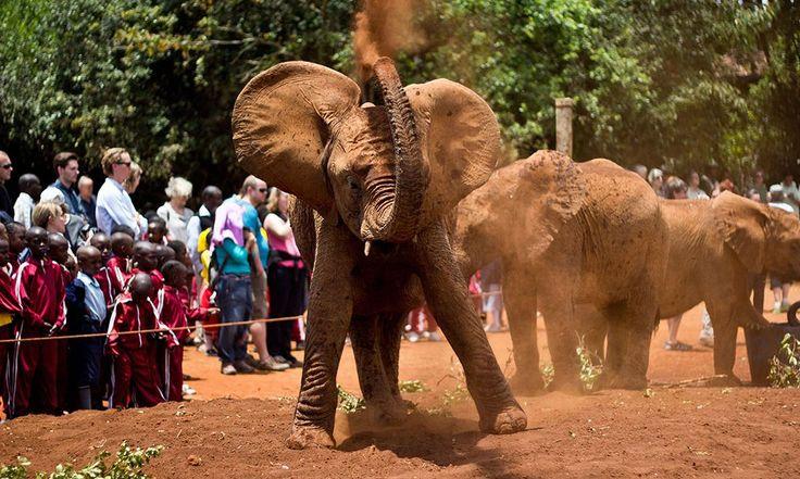 David Sheldrick Wildlife Trust.  Bebek filler için bir yetimhane ... Cidden, bebek filler ile yanlış gidemem!  David Sheldrick Wildlife Trust, Nairobi Ulusal Parkı, Bogan Kapısı, Magadi Road, Nairobi