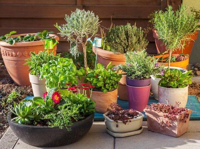Plantas de otoño: las 10 mejores para tu huerto