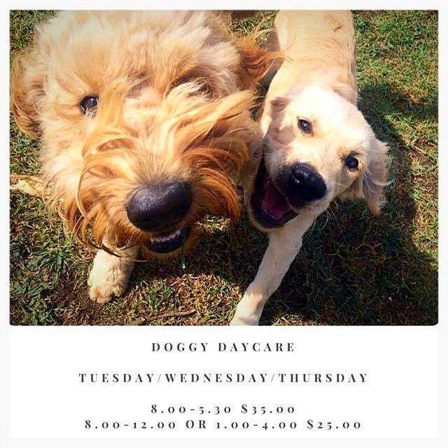 #doggydaycare #warrnambool3280 #dogs3280 #petnannie #warrnambool #3280 by petnannie